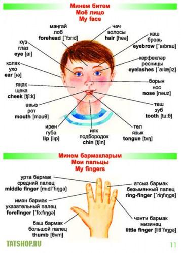 Малыши изучают язык (тат-рус-англ словарь) Image 2